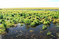 雁窝岛湿地草甸沼泽