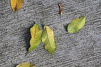 地板上的几片落叶