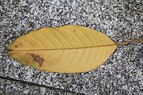 干枯的叶子