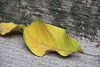 两片枯黄的叶子