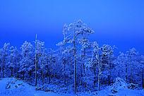林海雪原夜森林