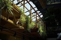 绿色植物装饰