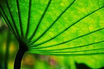 青荷盖绿水,芙蓉披红鲜。