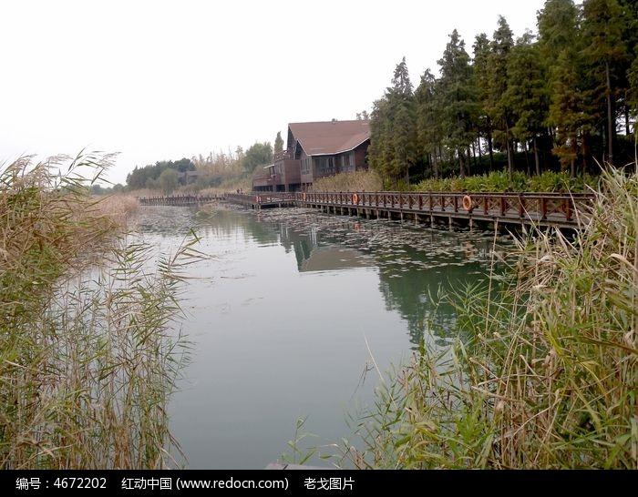 太湖水系芦苇荡
