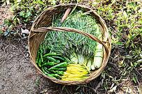一个装满蔬菜的篮子