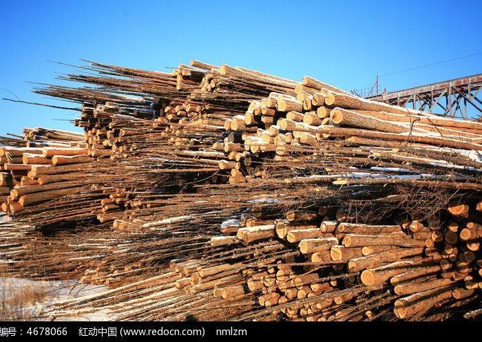 堆积的木材图片