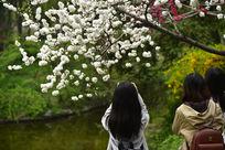 观赏樱花的少女