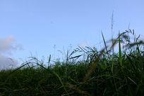 草地上的天空