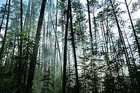 晨雾缭绕的森林