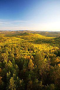 大兴安岭原始森林之秋