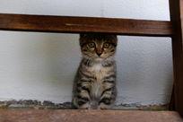 耳朵被挡住的小猫