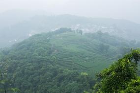 杭州南高峰龙井茶园