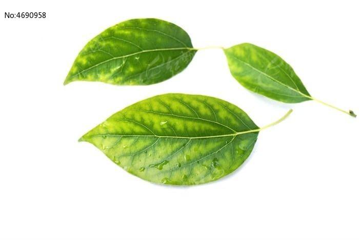 原创摄影图 动物植物 树木枝叶 环保叶子  请您分享: 红动网提供树木
