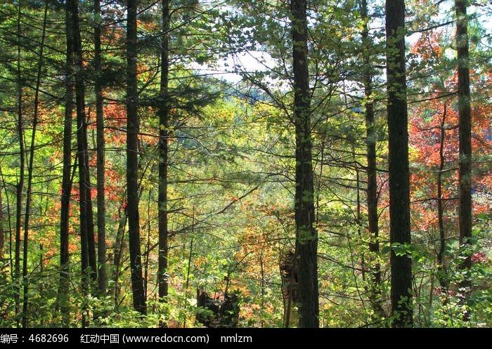 镜泊湖地下森林景区图片,高清大图_森林树林素材