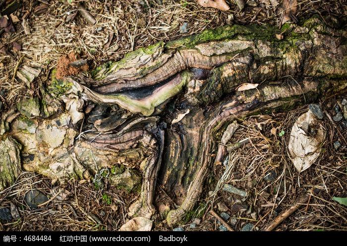 枯木花纹纹理图片