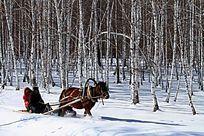 林海雪原马爬犁