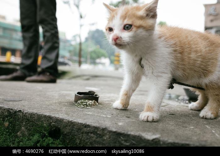 流浪的小猫图片,高清大图_陆地动物素材