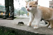 流浪的小猫