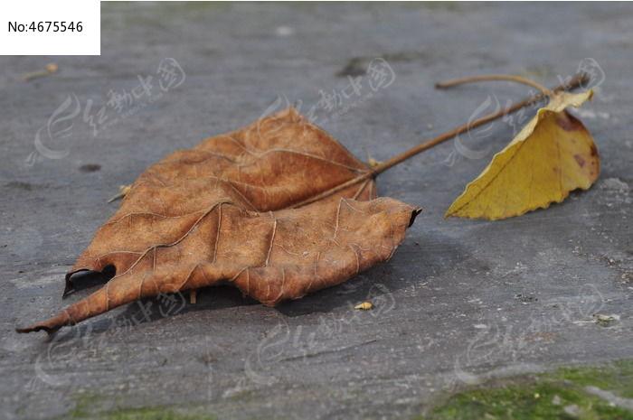 原创摄影图 动物植物 花卉花草 落叶与枯叶  请您分享: 素材描述:红动