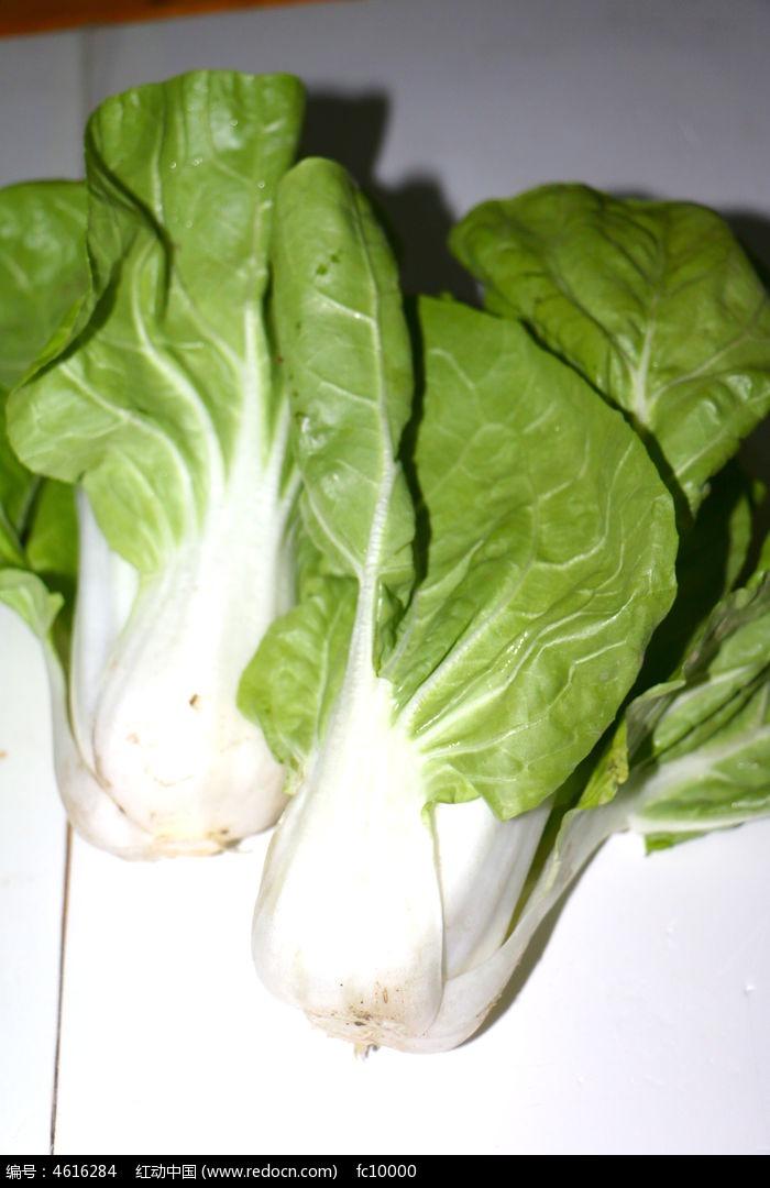 绿色白菜图片