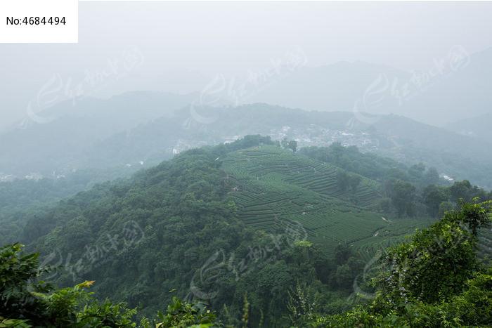 南高峰龙井茶园图片
