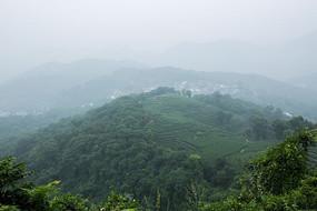 南高峰龙井茶园