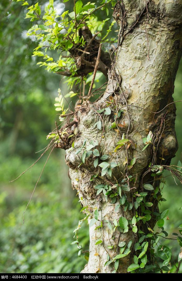 树木树根藤蔓