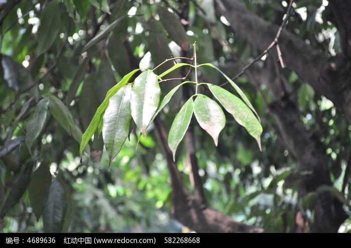 树叶图片,高清大图_树木枝叶素材