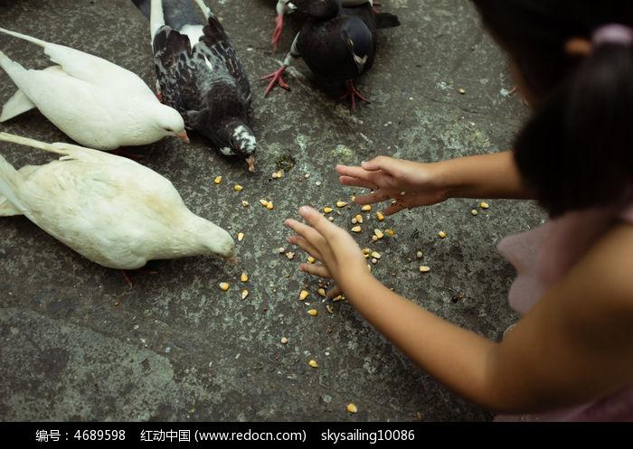 喂鸽子的小女孩图片