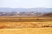 乌兰布统草甸风光