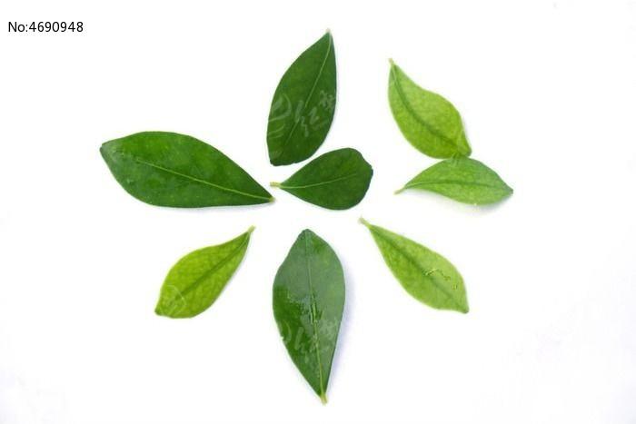原创摄影图 动物植物 树木枝叶 小叶子  请您分享: 红动网提供树木