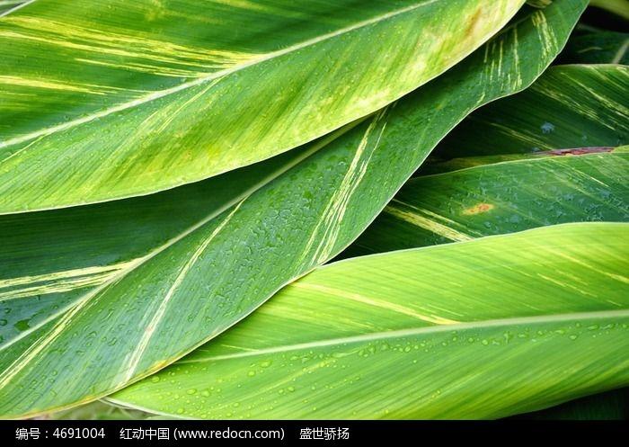 原创摄影图 动物植物 树木枝叶 叶子纹理背景