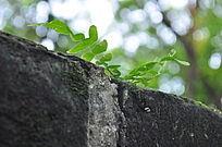 在裂缝中生长的小草