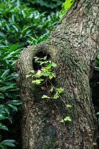 植物大树藤蔓枝叶