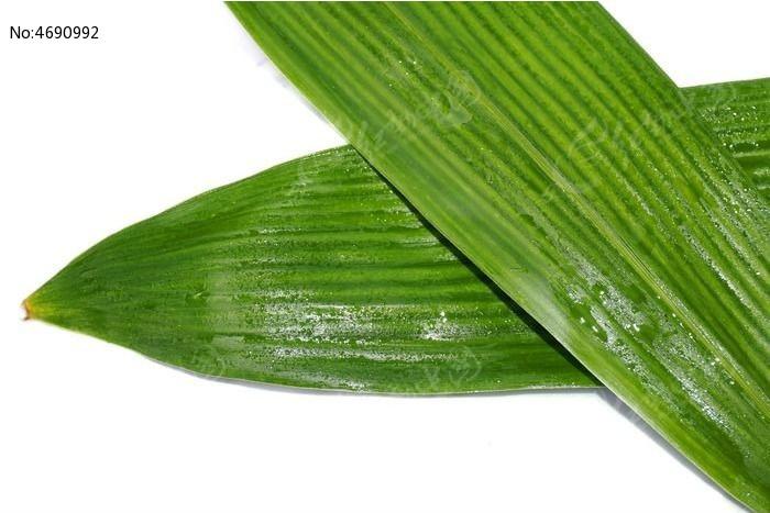 粽子叶子图片