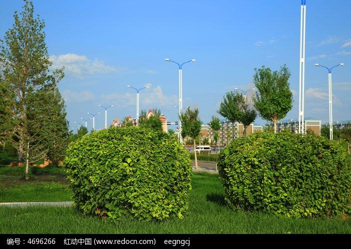原创摄影图 动物植物 树木枝叶 城市绿化风景
