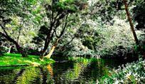 公园树林风景