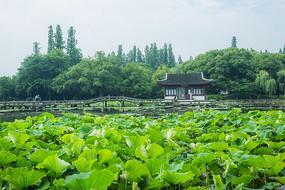 杭州西湖荷塘中国古典建筑