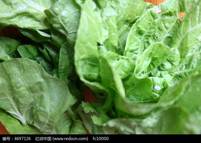 新鲜大白菜图片