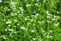 植物春天花卉花朵自然清新
