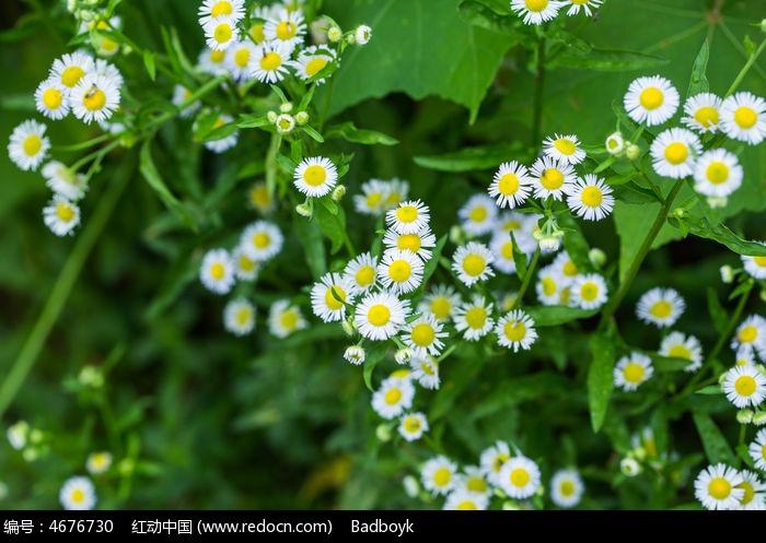 原创摄影图 动物植物 花卉花草 植物绿叶春天花卉白色菊花微距  请您