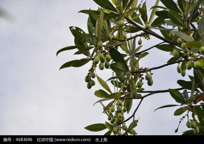 原创摄影图 动物植物 花卉花草 果实  请您分享: 红动网提供花卉花草
