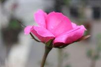 红色的孤独的花朵