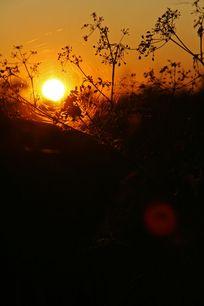 黄昏下的小草