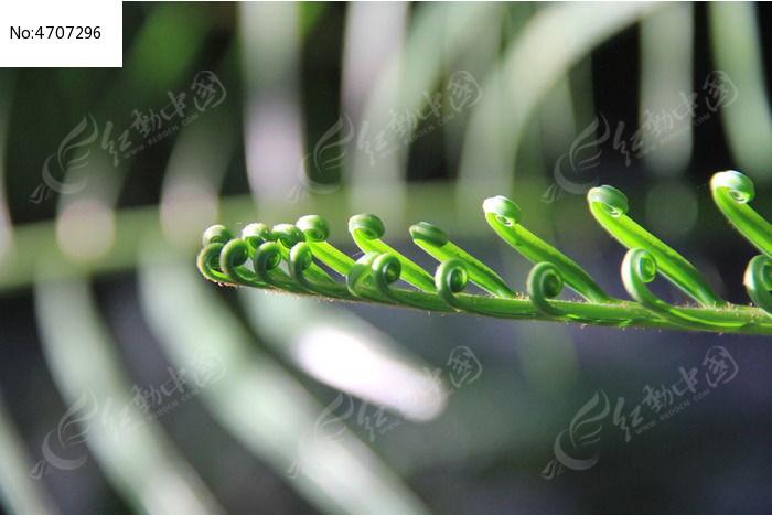 苔藓植物叶子图片,高清大图