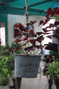 温馨花店 吊花盆