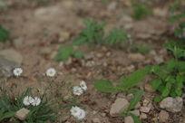 小草和野花
