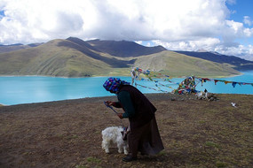 羊卓雍错上的妇人与羊