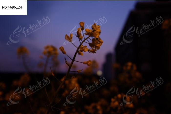 原创摄影图 动物植物 花卉花草 夜晚的小花