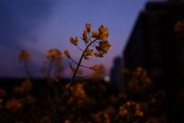 夜晚的小花